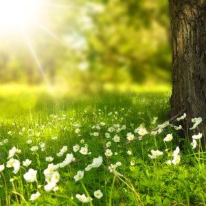 Rasenwissen Kategorie Rasenpflege im Frühling